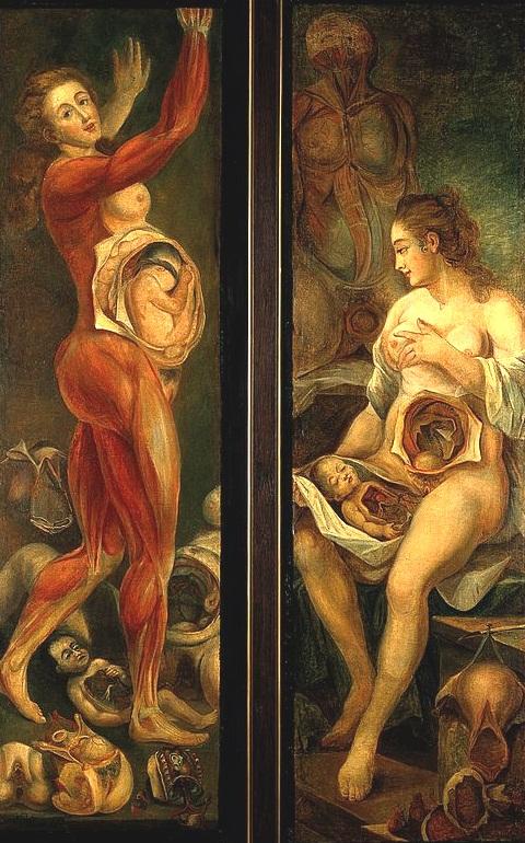 Anatomical figure_Jacques-Fabien Gautier DAgoty_1765_Wellcome