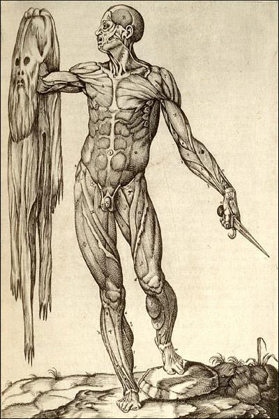 Anatomy of human body_Juan Valverde de Amusco_Rome-1559_via US National Library of Medicina