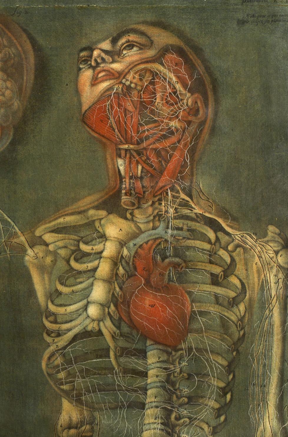 Throat and heart_Jacques Fabien Gautier d'Agoty_1745